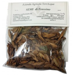 Semi di Frassino 50 gr
